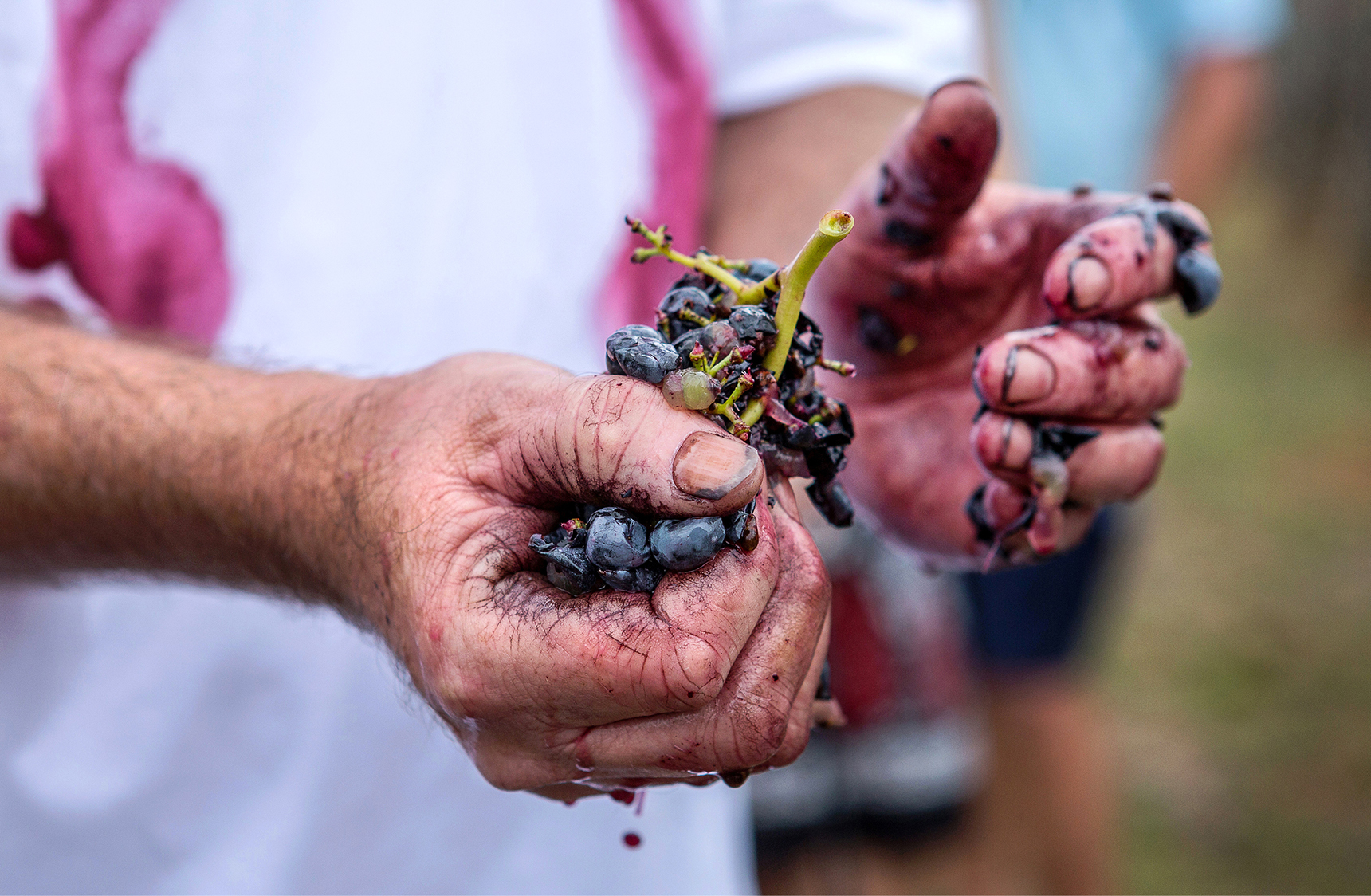 mjk_stomp-wines_01