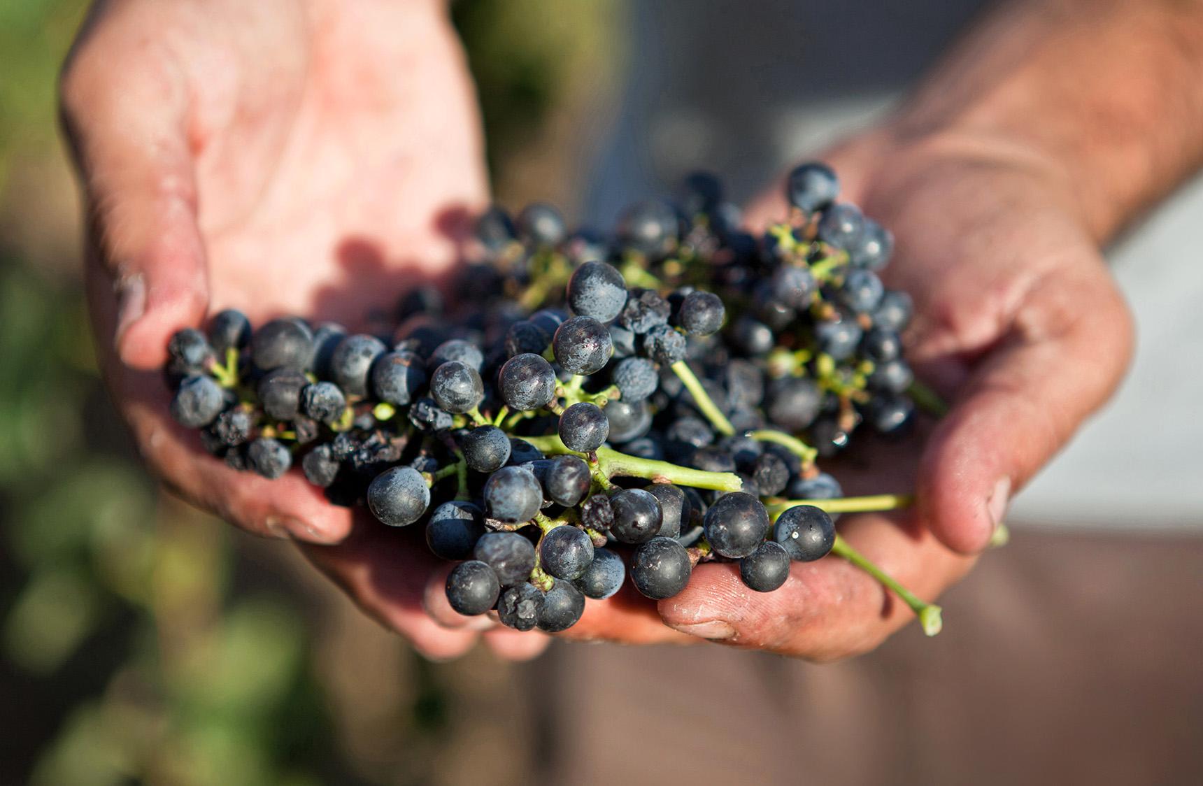 mjk_thomas-allen-wines_07